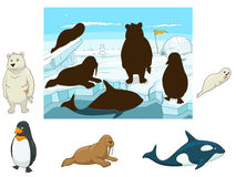 Arctic animals educational game for kids vector Stock Image