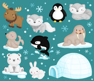 Arctic animals. A vector of arctic animals Stock Images