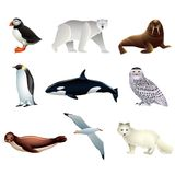 Arctic animals vector set Stock Photos