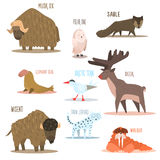 Arctic and Antarctic Animals, Birds. Vector Royalty Free Stock Photo