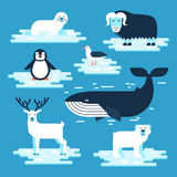 Arctic and Antarctic animals set, vector flat design illustration. Polar animals for infographic. White bear, penguin. Musk-ox, blue whale, petrel, seal vector illustration