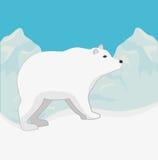 Arctic bear animal Stock Image