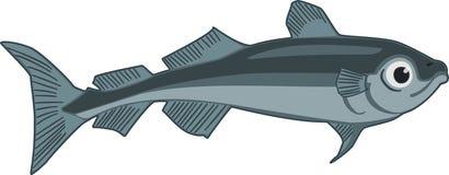 Arctic Cod. Illustration the arctic cod fish vector illustration