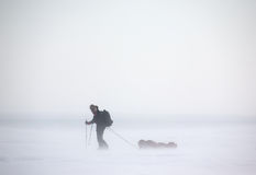 Arctic Expedition. A single person on a winter expedition in a snow storm Stock Photography
