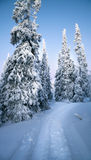 Arctic forest in winter Royalty Free Stock Image