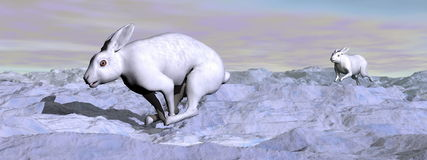 Arctic hares - 3D render Stock Photo