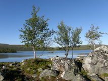Arctic landscape. With a lake, rocks and dwarf birch-trees Stock Photo