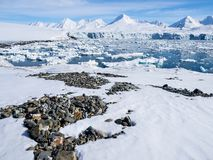 Arctic landscape - glaciers and mountains - Spitsbergen Royalty Free Stock Photo