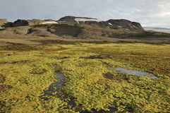 Arctic landscape in Iceland. Stock Photography