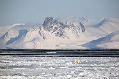 Arctic landscape with polar bear stock photos