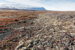 Arctic landscape in summer Stock Photography
