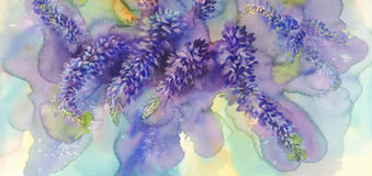 Arctic Lupines watercolor illustration Stock Photo