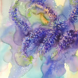 Arctic Lupines watercolor illustration Royalty Free Stock Photos