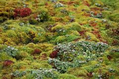 Arctic moss Stock Photos