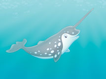Arctic narwhal. Illustration of a grey spotted narwhal with a long tusk swimming in a polar sea Royalty Free Stock Photos