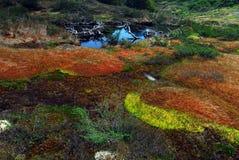 Arctic peatland Royalty Free Stock Photos
