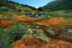 Arctic peatland stock photo