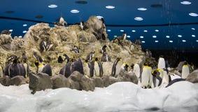 Arctic penguin Stock Image