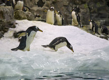 Arctic penguin Stock Images