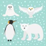 Arctic polar animal set. White bear, owl, king penguin Emperor Aptenodytes Patagonicus, Seal pup baby harp. Kids education cards. Stock Photo