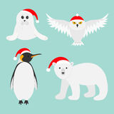 Arctic polar animal set. White bear, owl, king penguin Emperor Aptenodytes Patagonicus, Seal pup baby harp in red Santa hat.. Merry Christmas card. Winter Royalty Free Stock Photography