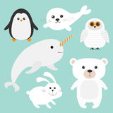 Arctic polar animal set. White bear, owl, penguin, Seal pup baby harp, hare, rabbit, narwhal, unicorn-fish. Kids education cards. Blue background.  Flat design Stock Photography
