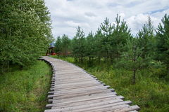Arctic sandbar forest trails Mohe Arctic Village Royalty Free Stock Photos