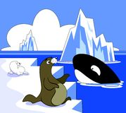 Arctic Scene. Vector illustration of an arctic scene with sea lions and a killer whale Stock Photos