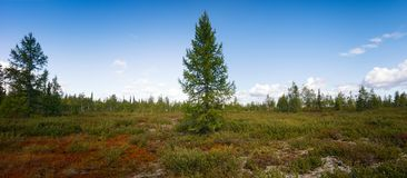 Arctic scenic summer nature tundra  panorama landscape Royalty Free Stock Photography