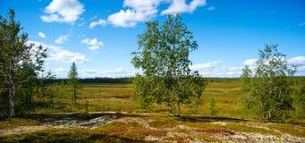 Arctic scenic summer tundra  panorama landscape Royalty Free Stock Image
