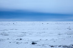 Arctic Sea Ice Royalty Free Stock Photos