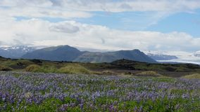 Arctic Summer Landscape in Iceland royalty free stock photography