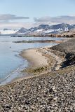 Arctic summer landscape - Spitsbergen, Svalbard Royalty Free Stock Photo