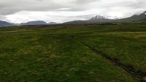 Birds flying over meadows, a typical view in Iceland. Arctic tern birds flying over meadows with yellow buttercups, snow clad mountain tops in the background stock footage
