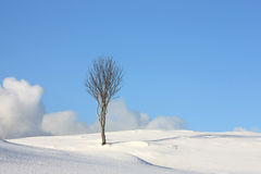 Arctic tree sky & clouds Stock Images