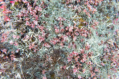 Arctic vegetation Stock Photo