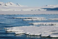 Arctic winter landscape - sea, glacier, mountains royalty free stock photography