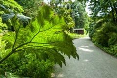 Arctium Lappa στο βοτανικό κήπο Στοκ φωτογραφία με δικαίωμα ελεύθερης χρήσης