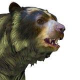 Arctodus Bear Head Royalty Free Stock Photos