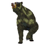 Arctodus Bear on White Royalty Free Stock Image