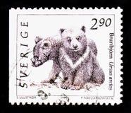 Arctos Ursus бурого медведя, serie диких животных, около 1993 Стоковое Изображение