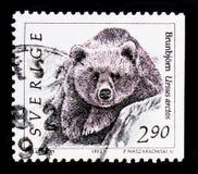 Arctos Ursus бурого медведя, serie дикого животного, около 1993 Стоковые Изображения RF