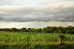 Arcus Shelf Storm Cloud Over Midwest American Corn Field. A dark Arcus Shelf Storm Cloud is stretched out in the sky over a midwest American cornfield and forest royalty free stock images