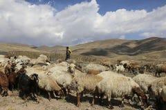 ARDABIL, IRAN 26 SEPTEMBER, 2018: Iraanse herder en troep van kudde van rammen en geiten bij de voet van de inactieve vulkaan Sab stock afbeeldingen