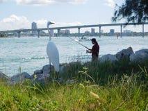 Ardea alba in Tamper, Florida royalty-vrije stock foto