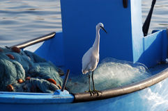 Ardeidae Bird in Acre Israel. A Ardeidae bird rests on a fishing boat in Acre port Royalty Free Stock Photos