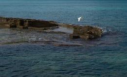 Ardeidae flying on the coast Stock Photo