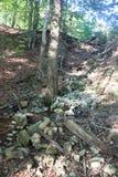 Ardenne przy lokacja losem angeles Roche w Belgia Zdjęcia Stock