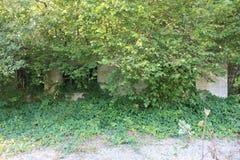 Ardenne przy lokacja losem angeles Roche w Belgia Fotografia Royalty Free