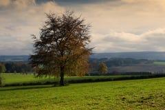 Ardennen krajobraz Zdjęcia Stock